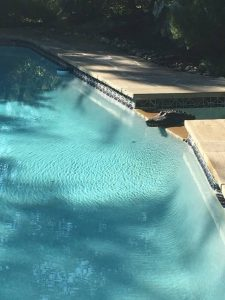 Pool-with-clean-water-and-crocodile-is-found-in-the-pool-after-being-cleaned
